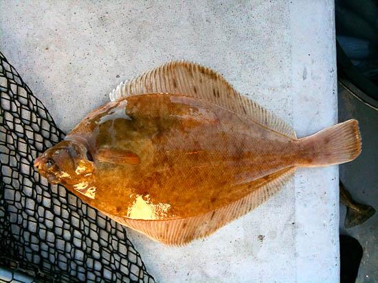 Cod Fishing 29.01.10-300110-005