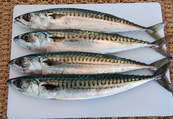 Mackerel-260410-001