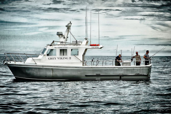 Grey Viking II
