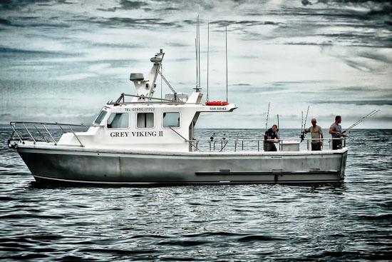 Grey Viking II