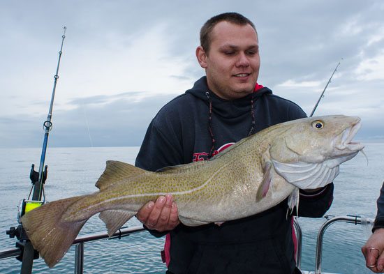 The winter cod season for 2012 is officially open for What is cod fish