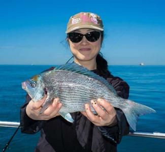3lb Bream Reef Fishing