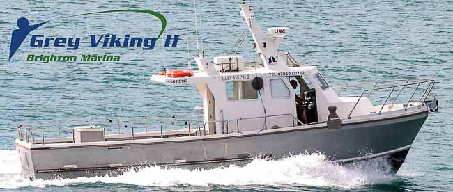 Latest News - Grey Viking - Brighton Charter Fishing