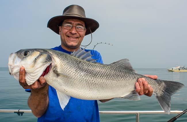 reef fishing 8lb Bass