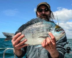 April to June is the peak of the inshore Bream Fishing on the reefs to the west of Brighton with good sized specimens like this one of 4lbs 4oz caught regularly