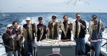 summer cod fishing wrecks